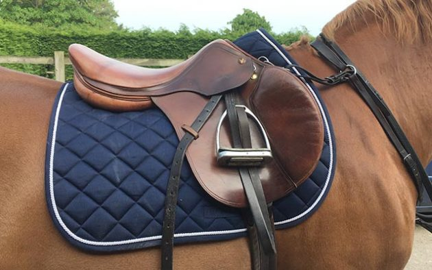 advanced saddle pad horse and hound review