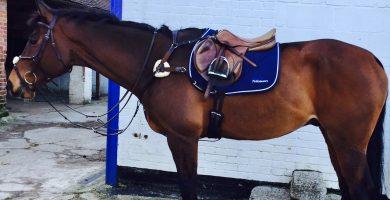 numnah saddle pads