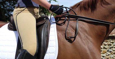professional saddle pads