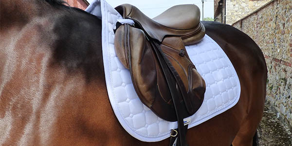 competitive equestrian sport